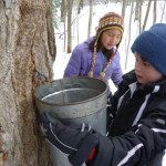 Grade 2-3 Maple Sugaring 2015